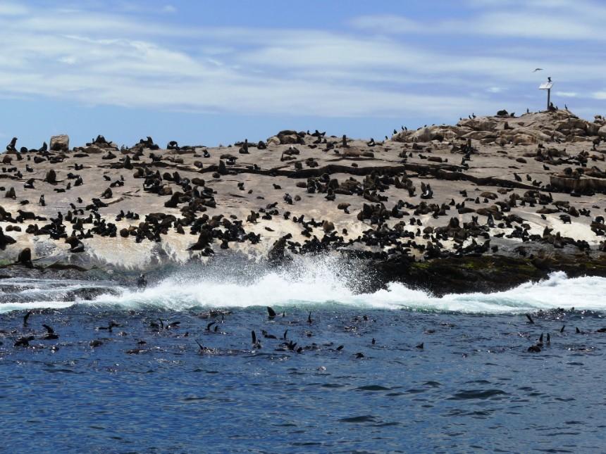 Days 8 & 9: Seal Island